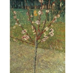 Van Gogh Almond Tree