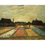 Van Gogh Bulb Fields