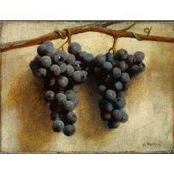 S Joseph Decker Grapes